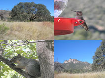 Collage from Miller Canyon, Arizona Royalty Free Stock Images