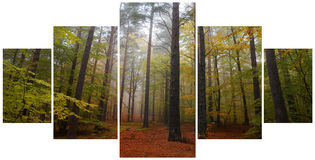 Collage of misty forest at dawn in the autumn Stock Photos