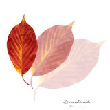Collage mit Blättern der Sauerkirsche Stockfotografie