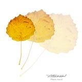 Collage mit Blättern der zwergartigen Pappel Lizenzfreies Stockfoto