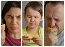 Collage mit der Familie, die Zitrone isst und dumme Gesichter macht stockfotografie