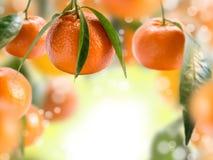 Collage mit Tangerinen. Lizenzfreie Stockfotos