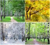 Collage mit vier Jahreszeiten stockfotos