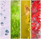 Collage mit vier Jahreszeiten Stockfoto