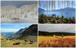 Collage mit vier Jahreszeiten lizenzfreies stockbild