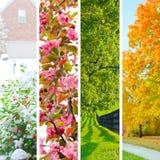 Collage mit vier Jahreszeiten Stockbilder