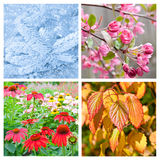 Collage mit vier Jahreszeiten Stockbild