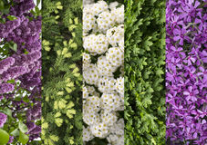 Collage mix of herbs and flowers photoes. Background Royalty Free Stock Photography