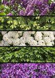Collage mix of herbs and flowers photoes. Background Royalty Free Stock Photo