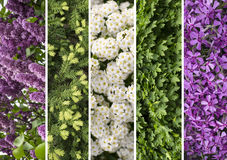 Collage mix of herbs and flowers photoes. Background Royalty Free Stock Photos