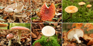 Collage of mushrooms Stock Photo
