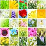 Collage natural de la primavera Imagen de archivo