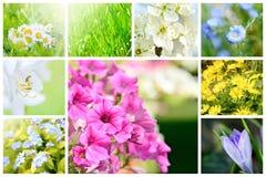 Collage natural de la primavera Imagen de archivo libre de regalías