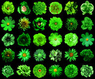 Collage of natural and surreal green flowers 30 in 1 Stock Image