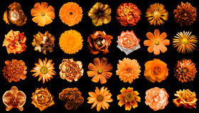 Collage of natural and surreal orange flowers 28 in 1 Stock Photos