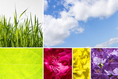 Collage of nature photos with cloudy sky, grass, leaf and flower Stock Images