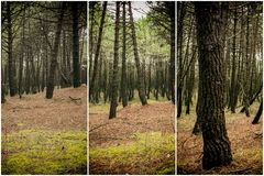 Collage nature, pine forest Royalty Free Stock Photo