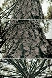 Collage nature, trunk of tree Royalty Free Stock Images