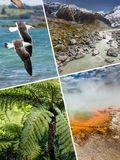 Collage of New Zealand images - travel background (my photos) stock photos