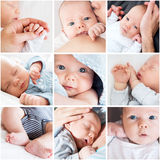 Collage of newborn baby's photos Royalty Free Stock Image