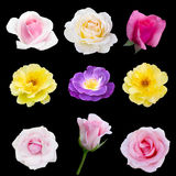 Collage of nine roses Royalty Free Stock Images