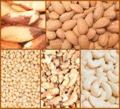 Collage Nuts degli ambiti di provenienza Immagine Stock Libera da Diritti