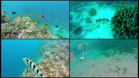 Collage Ocean scenery on shallow coral reef. Underwater video of the ocean. Small fish swim erratically and hidden by