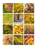 Collage October Royalty Free Stock Photography