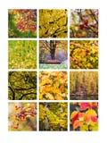 Collage octobre Photographie stock libre de droits