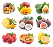Free Collage Of Exotic Fruits Stock Images - 161370264