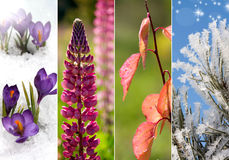 Collage Of Four Seasons Stock Photography