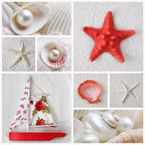 Collage Of Sea Stars Royalty Free Stock Image