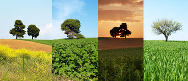 Free Collage Of Trees Royalty Free Stock Images - 25216539