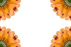 Collage of orange beautiful lily flowers on a white background. royalty free stock photography
