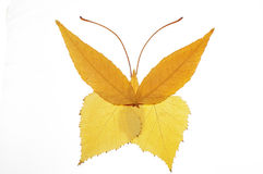Collage painting with leaves--butterfly. Collage painting with leaves,interesting Royalty Free Stock Photography