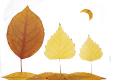 Collage painting with leaves--moonlit night Stock Photography