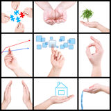 Collage from palms Royalty Free Stock Image