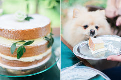 Collage photo of wedding cake in rustic style and little cute puppy in the forest Royalty Free Stock Photos