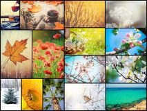 A collage of photographs is the seasons. Selective focus stock image