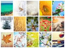 A collage of photographs is the seasons. Selective focus stock photos