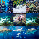 9 collage photos, aquarium of Barcelona Royalty Free Stock Photo