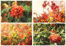 Collage of photos with an autumn background stock photo