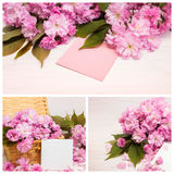 Collage of photos cherry blossoms. Royalty Free Stock Photo