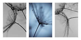 Collage with photos of dandelions. Artistic photos of dandelions royalty free stock photography