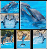 Collage of photos of dolphins in a show Stock Image