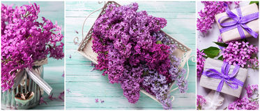 Collage from photos with fresh lilac on  turquoise wooden backgr Royalty Free Stock Image