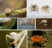 A collage of photos of insects Stock Photos