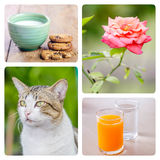 Collage picture. Of cat, rose and drink in frame royalty free stock photo