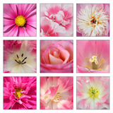 Collage of pink flowers Stock Photography