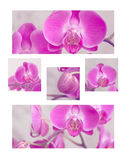 A collage of pink orchids Stock Image